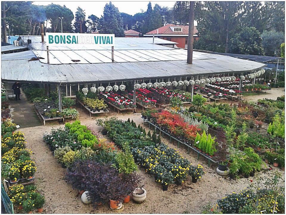 Bonsaidea Vivai